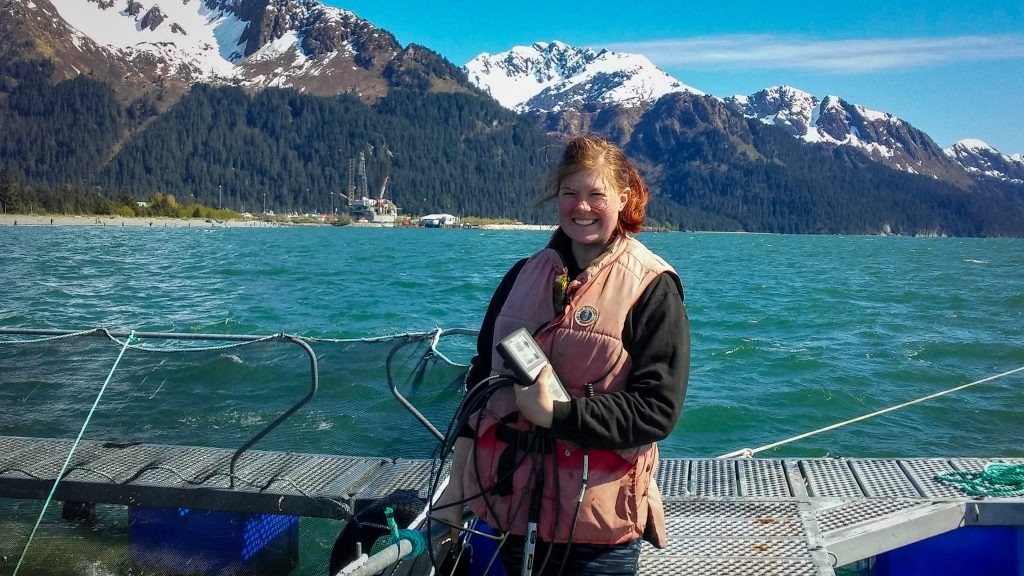 Net pens hold sockeye smolt in Resurrection Bay